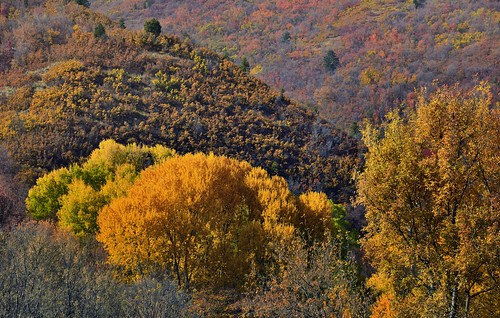 aspen aspenleaves aspentrees aspens autumncolors autumnleafcolors azimuth223 capturenx2edited centralwasatchrange colorefexpro colorofleaves coloroftrees day8 hillsideoftrees landscape leafcolors lookingsw mounttimpanogos mountains mountainsindistance mountainsoffindistance mountainside multitudeofplantleafcolors nature nikond800e outside populustremuloides project365 quakies quakingaspen rockymountains sforkrd sunny trees utahnationalparks2017 wasatchrange westernrockymountains vivianpark ut unitedstates