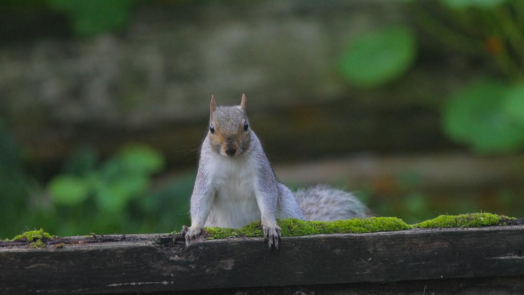 Catch the Squirrel.. 2020