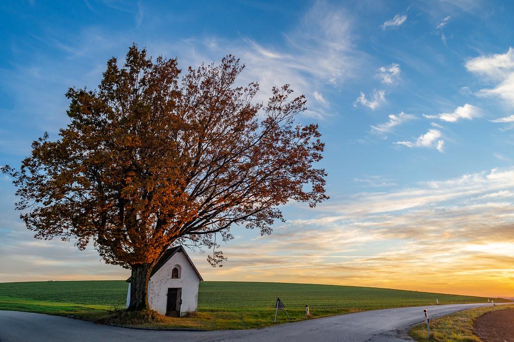 El árbol y la hermita