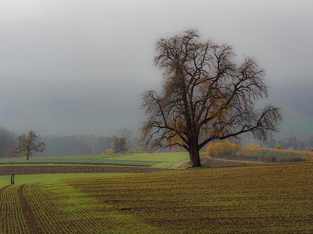 Warten auf den Schnee... there is light in the fog