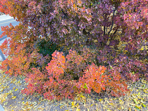 fall_color_Prescott-20201106-101