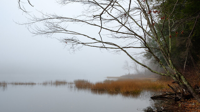 Upper Narrows Pond