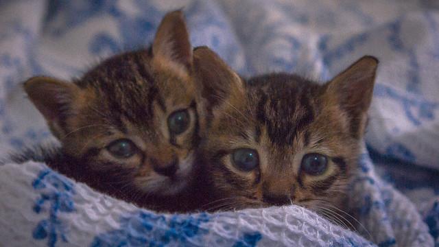 Kitties_201002
