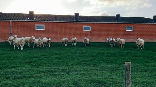 schapenrechtbank