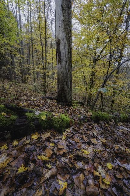 Ohiopyle Woodland