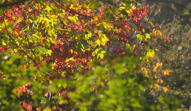 Autumn Colours @ PRP