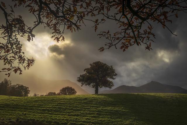 Keswick Lone Tree