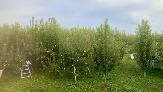 五能線 りんご畑