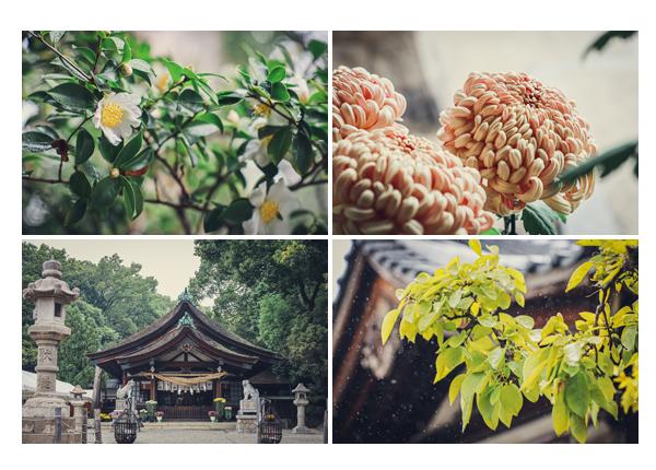 秋の知立神社 境内を彩る菊の花