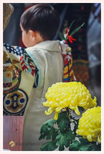 七五三は菊の花が咲く季節 秋 11月