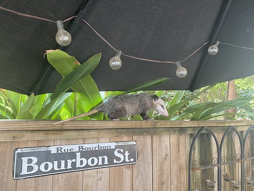 There's a Squeakies over Bourbon Street tonight...
