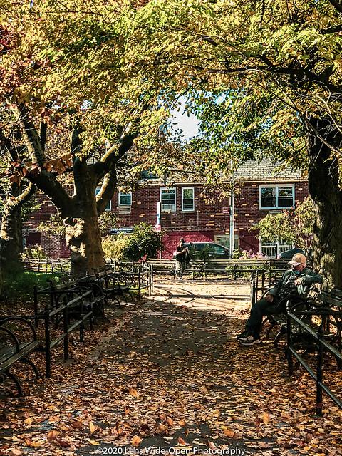 Autumn Foliage (Day 242)