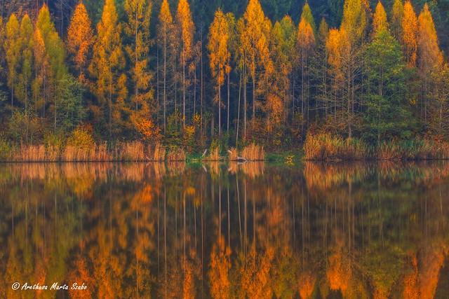 Autumn foliage reflecting in Lake, Őrség National Park Hungary