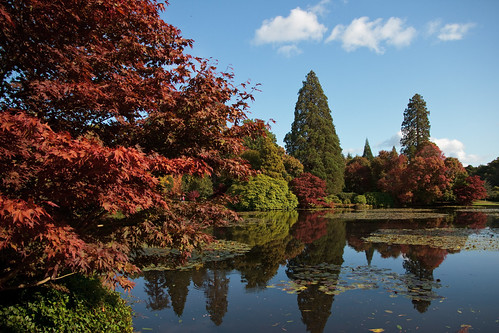 sheffieldparkgardens sussex eastsussex nationaltrust autumn autumn2020 tree trees autumncolour autumncolor fallcolor lake pond water reflected reflection calm sky bluesky clouds whiteclouds canonefs1585mmf3556isusm
