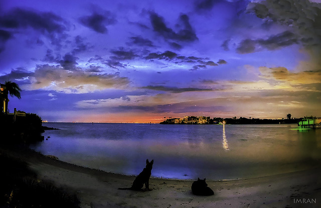2 German Shepherd Dogs Sat Absolutely Still In 30 Seconds Night Time Multiple Long-Exposures Panorama Of Absolutely Still Tampa Bay Florida  - IMRAN™