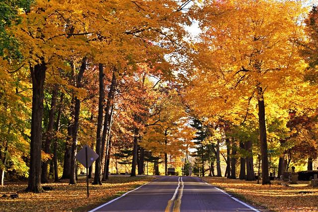 Autumn Awesomeness #19 (Explored)