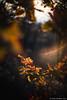 Passeggiando per Erbusco in autunno