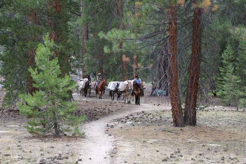 We met with some stock animals and horses on the High Sierra Trail at Junction Meadow