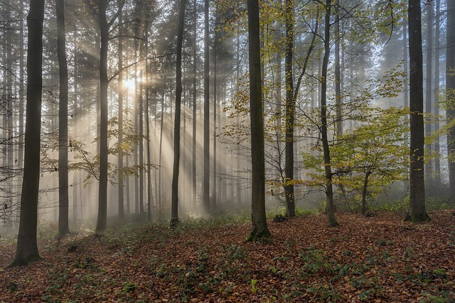 *A beautiful day in the autumn forest*