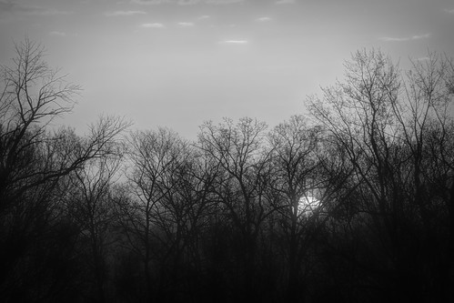 2020 april kevinpovenz westmichigan michigan ottawa ottawacounty ottawacountyparks outdoors outside grandrivernorthravines morning morningsky sunrise sun blackandwhite bw canon7dmarkii trees silhouette