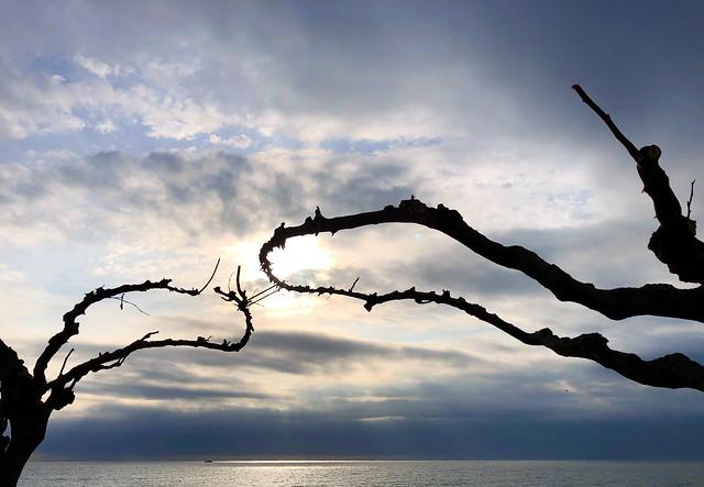 El cielo entre ramas