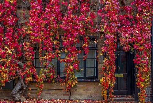 london door red autumn uk british buildings architecture city fall britain urban gb window leaves england