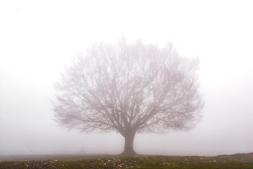 Nieblas por Urbasa