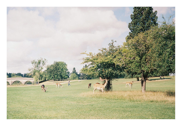 FILM - deer and bridge