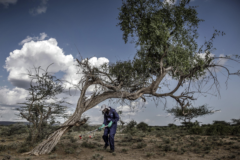 Kenya | Desert locust control operations