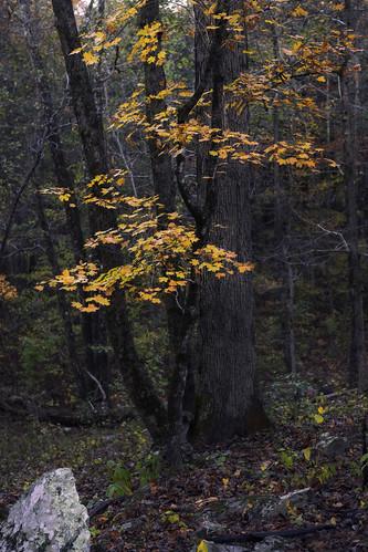 events daytrips arkansas usa places fallingwatercreek subject landscape fallcolors rocks trees