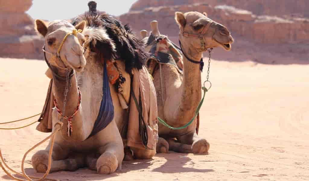 du-gel-inspiré-des-chameaux-garde-les-objets-frais