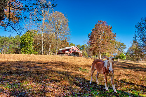 georgia unitedstates northgeorgia mccaysville trees sunset horses mountains barn landscape fallcolor