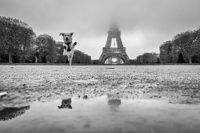The Eiffel, fog and the dog...