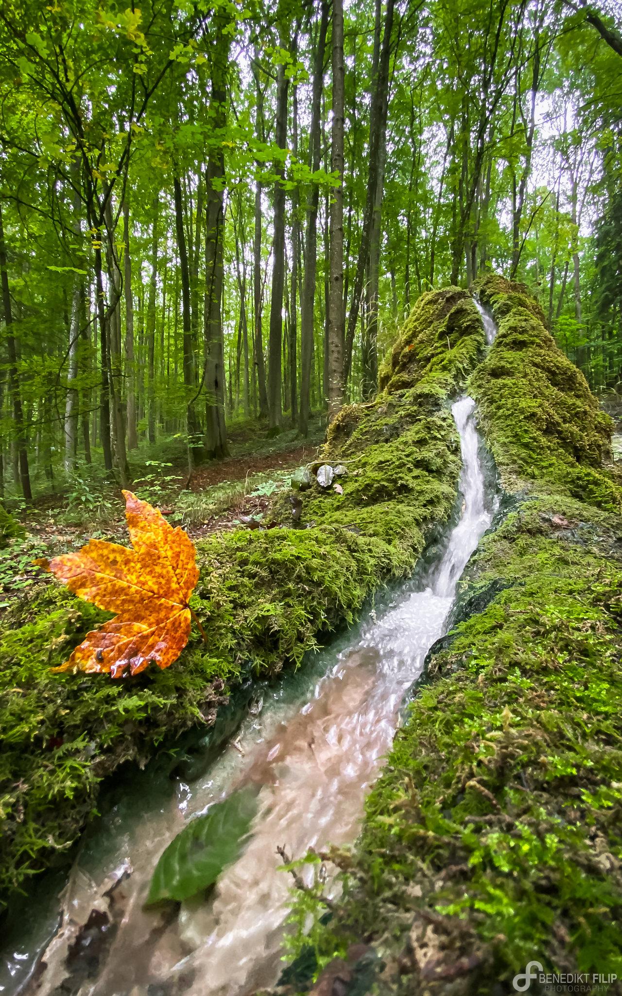 Stone Gutter fascinating natural phenomena