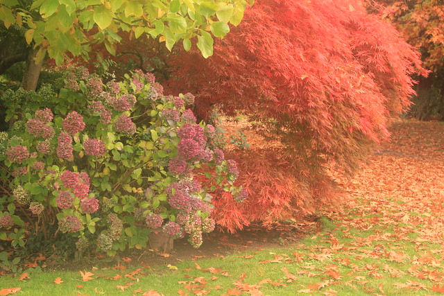 Panteg Park Autumn