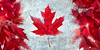 Maple Leaf Flag Frozen