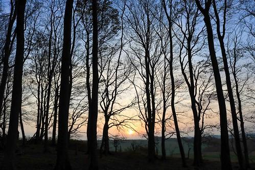 royston sunset jubileewood therfieldheath hertfordshire england unitedkingdom uk trees silhouette lightroom canoneos750d autumn november