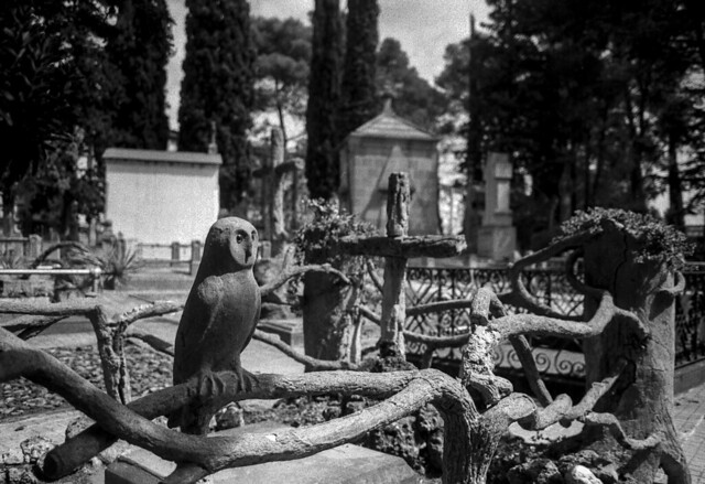 En companyia de l'òliva / Forever owl
