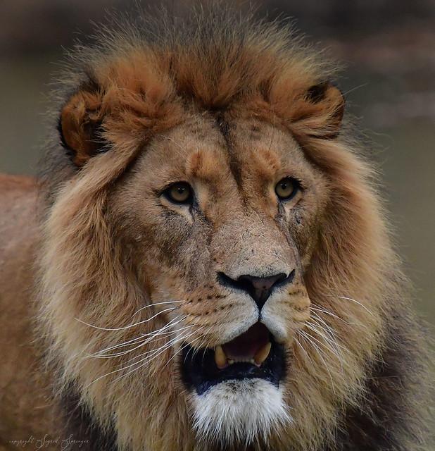 König Tsavo