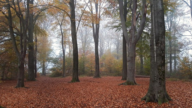 Misty Autumn , Wamberg 2020