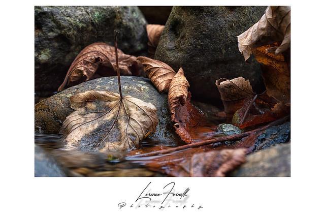 Autumn compo