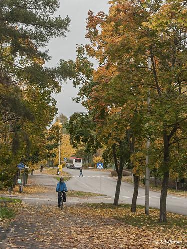 autumn espoonlahti espoo cityview trees road transportation autumncolours 400d ef1740mmf4lusm