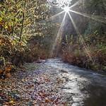 Silver Creek Sunburst