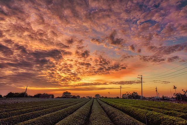 茶園夕陽雲彩