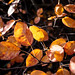 Immer noch Herbst