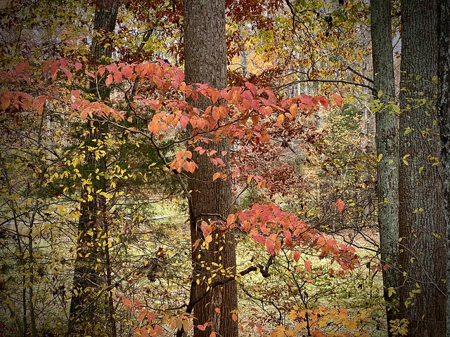 End of Fall, Arcadia, NC, 2020