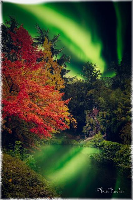 le dragon sort, tel un loup garou, uniquement à l' automne, et sous une aurore boréale