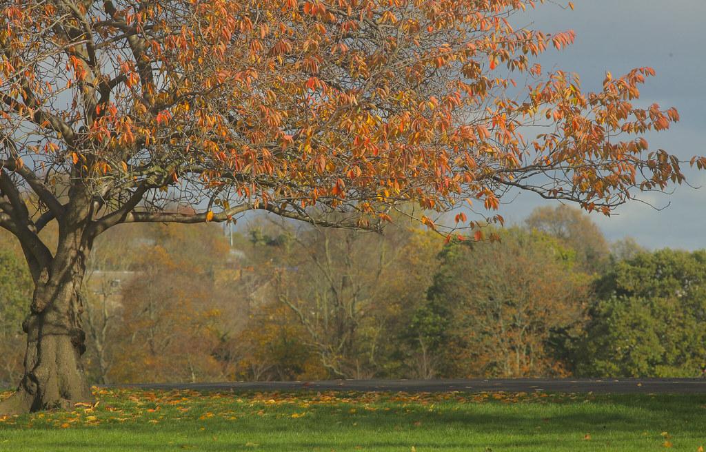 My Local Autumn View @SE22
