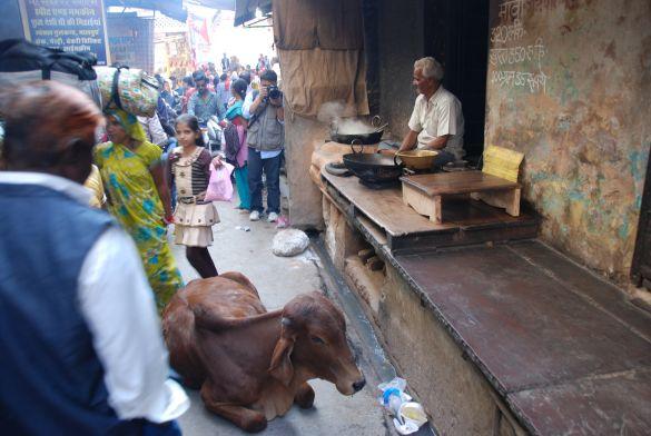 DSC_2128IndiaPushkarCamelFair