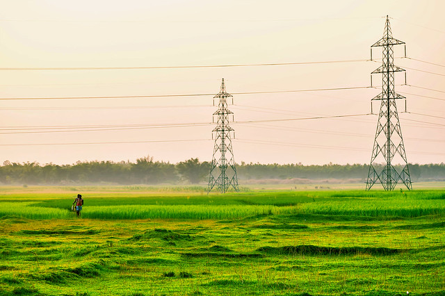 The paddy fields in Autumn